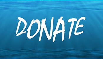 "A picture of the word ""Donate"" in an underwater scene."
