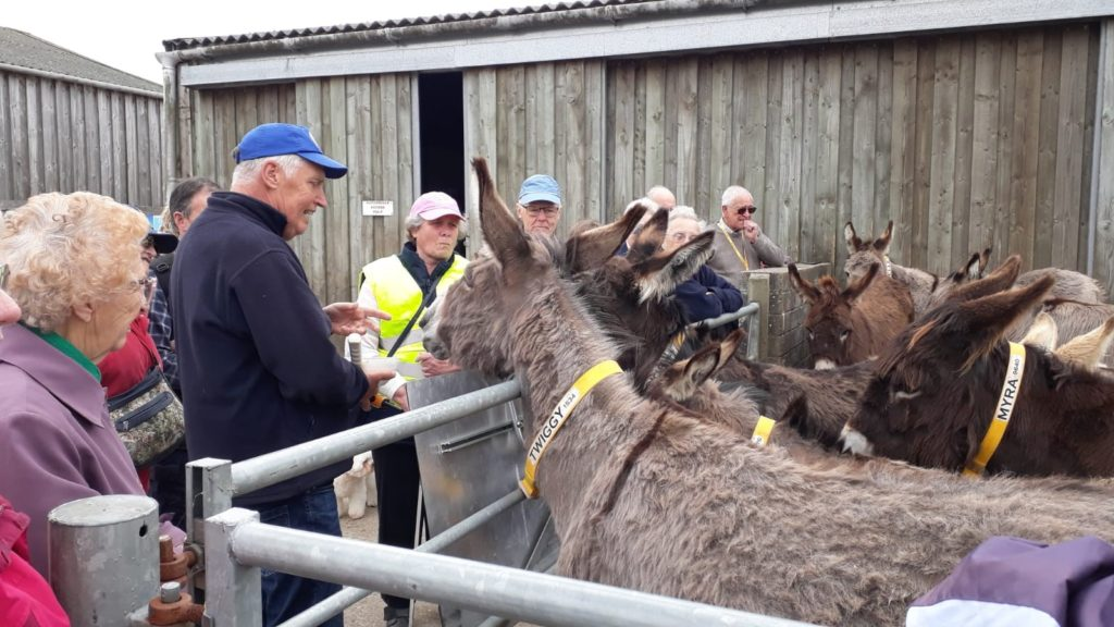 The Donkey Sanctuary Guide educates our members with donkey facts.