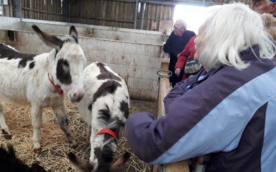 Trip to Donkey Sanctuary